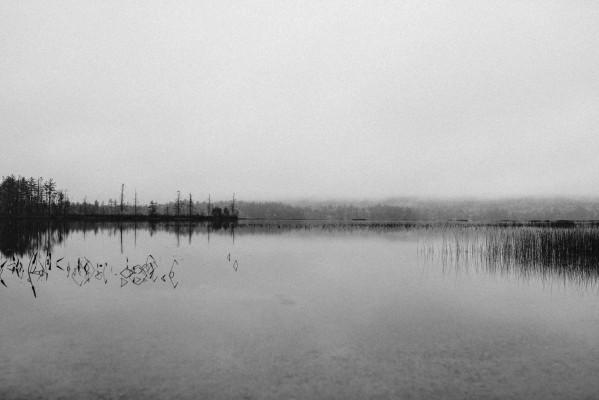 Spiegelung in stillem See von Bäumen und Seegras