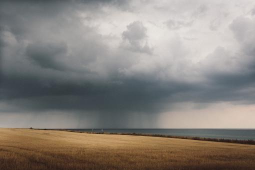 Regenguss über einem reifen Getreidefeld